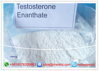 China Anabolic Steroid Powder Muscle Gain Testosterone Enanthate 99% Assays CAS 315-37-7 supplier