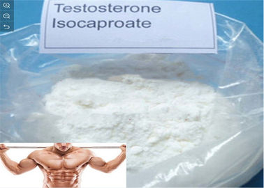 China Bodybuliding and Muscle Gaining Testosterone Isocaproate Anabolic Steroids White Powder supplier