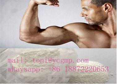 China Oral Turinabol Steroid Powder 4-Chlorodehydromethyltestosterone supplier