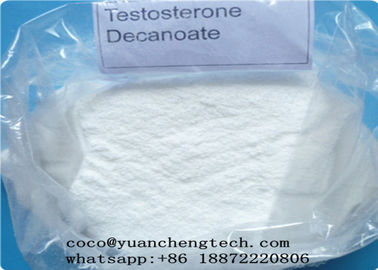 China Muscle Mass Testosterone Steroids , Testosterone Decanoate Human Growth Cutting Cycle Steroid supplier
