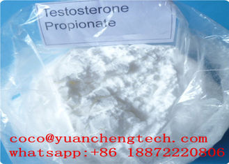 China White Powder Testosterone Propionate Steroids Hormone Injectable For Body Building supplier