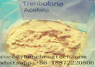 China Tren A Revalor -H Finaplix Trenbolone Acetate Steroid Raw Steroid Anabolic Hormone Powders factory
