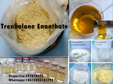 China Yellow Steroid Powder Trenbolone Enanthate for Bodybuilding with Good Quality distributor
